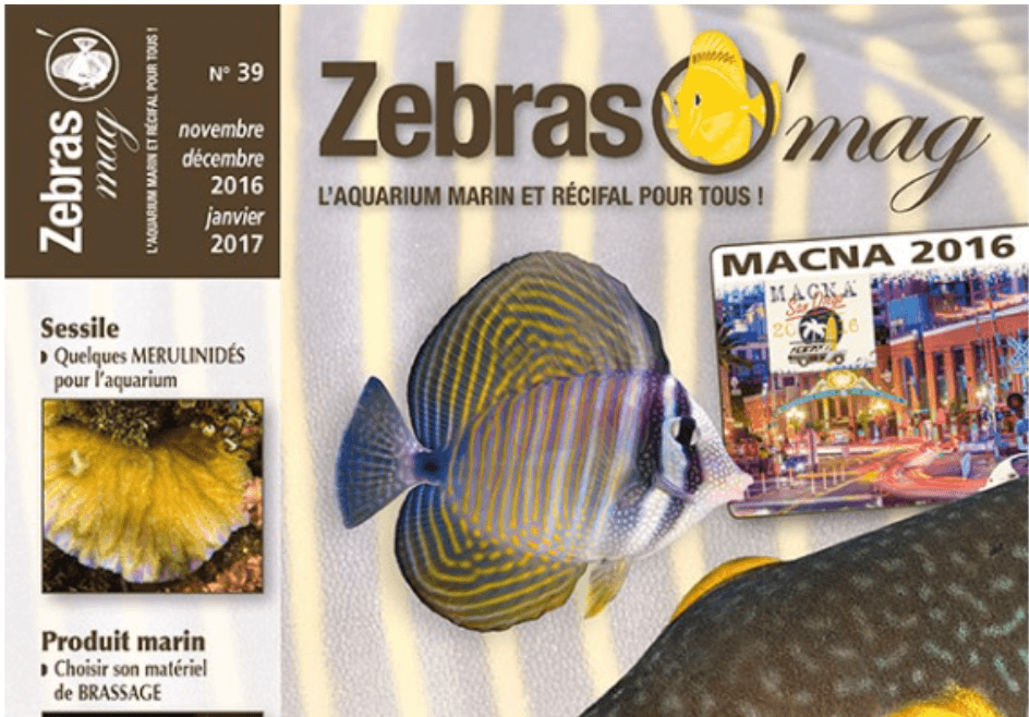 zebraso-mag-n39-couv