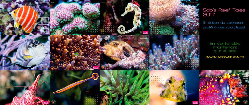 Calendrier Sab's Reef Tales - Les Contes du Récif 2017