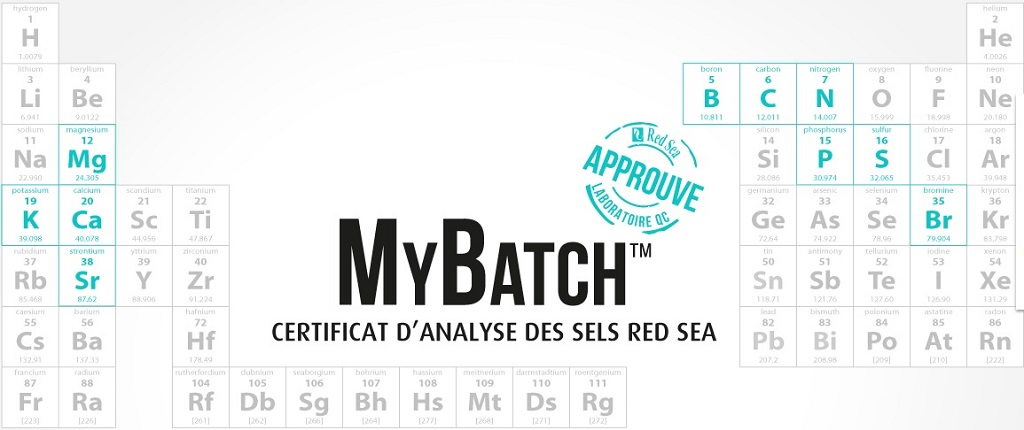 red-sea-mybatch