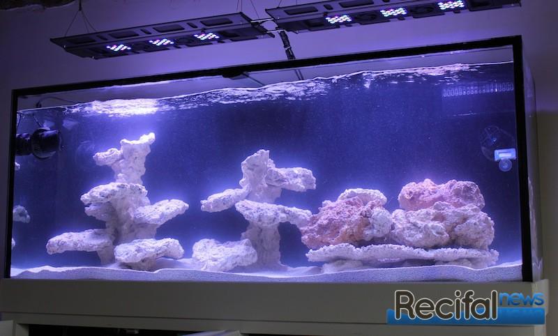 aquarium en eau avec des aquaroches et le protocole daphbio