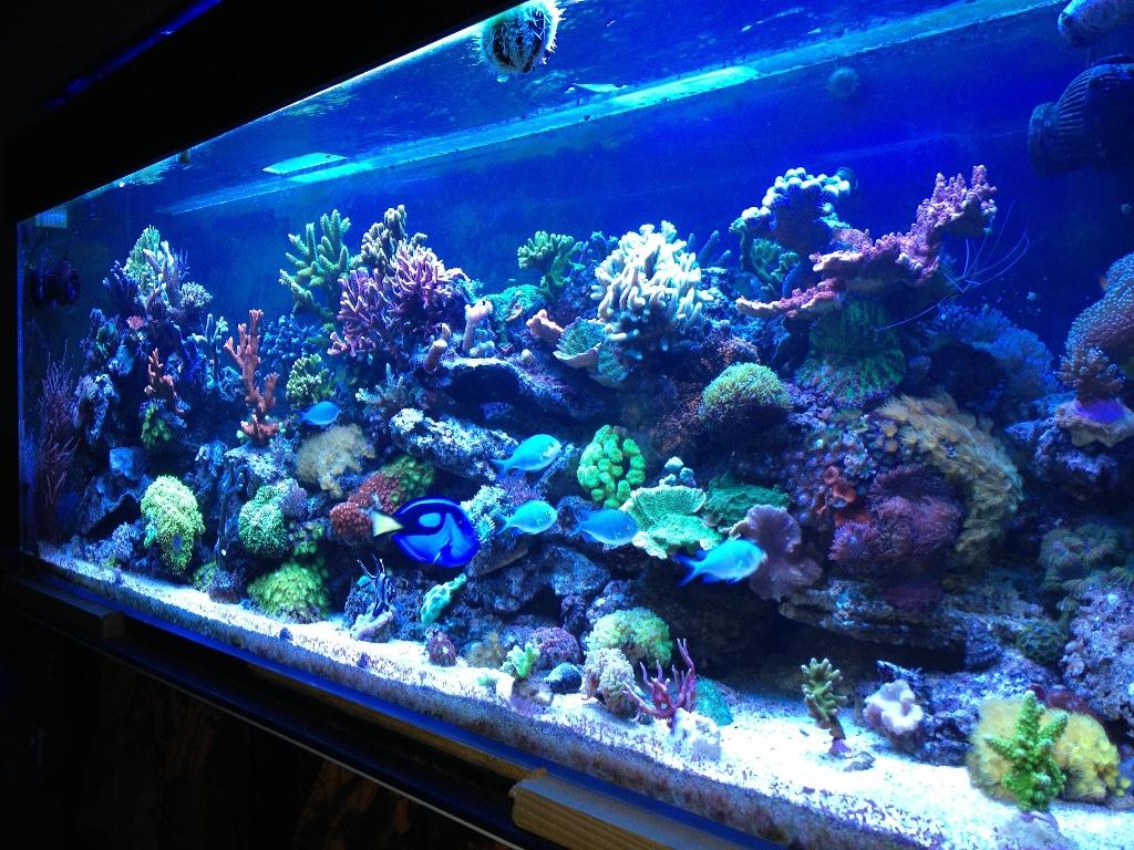 aquarium sous protocole daphbio