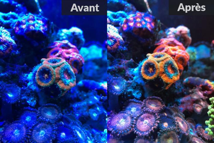 Aquariclip Avant Apres