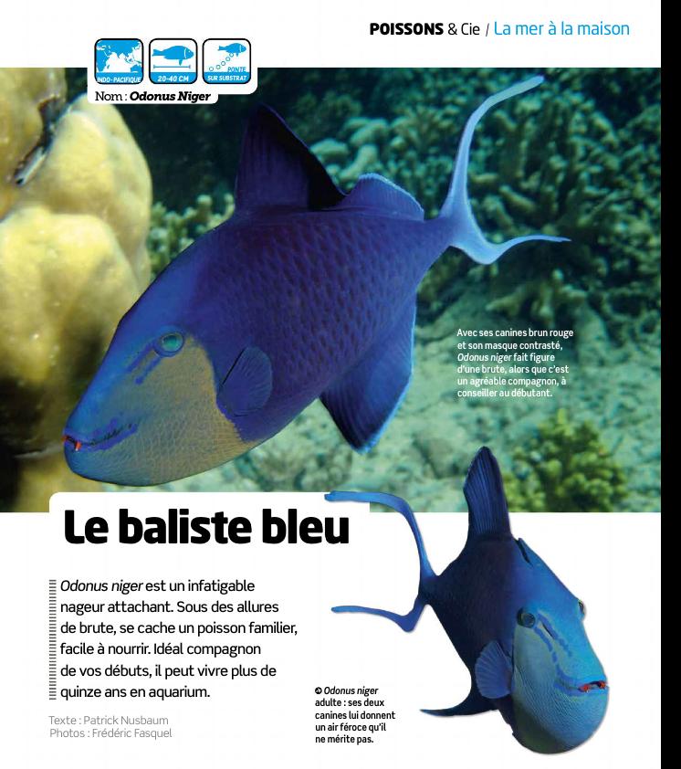 Aquarium la maison 122 odonus niger r cifal news for Aquarium a la maison pdf
