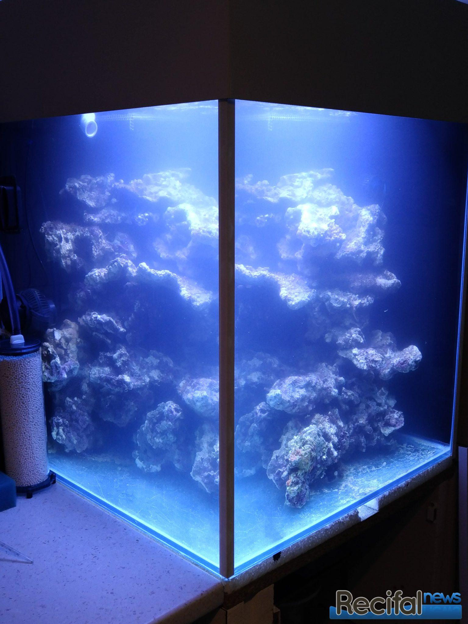 Démarrage Et Mise En Place Dun Aquarium Récifal Spécifique Partie