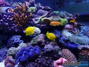 aquarium récifal mature