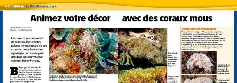 Aquarium la maison 124 les coraux mous r cifal news for Aquarium a la maison pdf