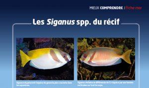aquarium à la maison 124 Siganus Recifalnews