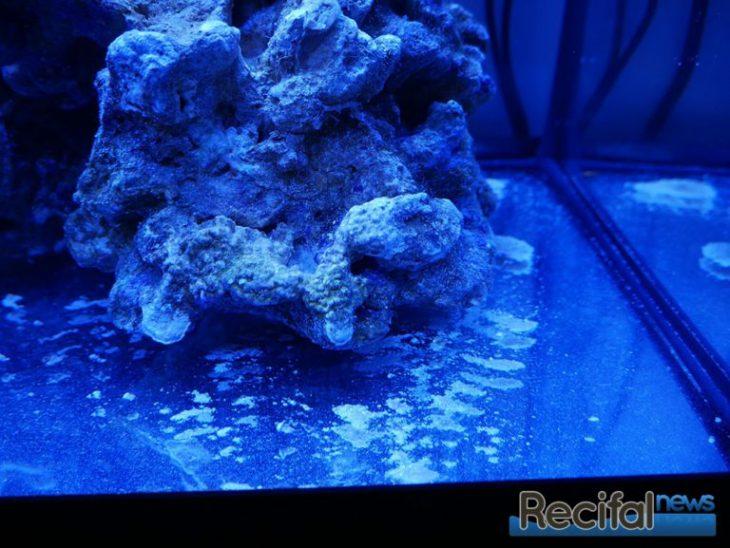 eheim_aquastar63_marine_recifalnews sediments