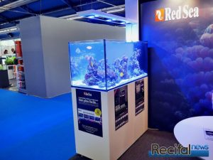 red sea peninsula 500 animal expo recifalnews