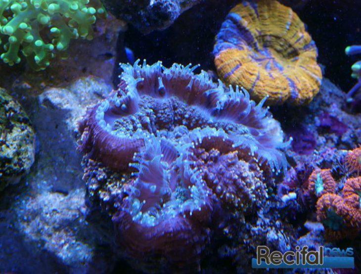 Arka Biotechnlogie Coral Food LPS