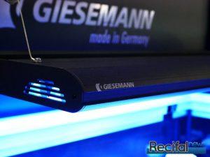 Giesemann Gemini Hybrid Recifalnews