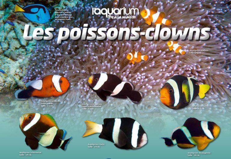 aquarium la maison 125 les poissons clowns r cifal news. Black Bedroom Furniture Sets. Home Design Ideas