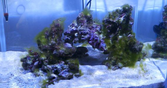 aquarium récifal nano