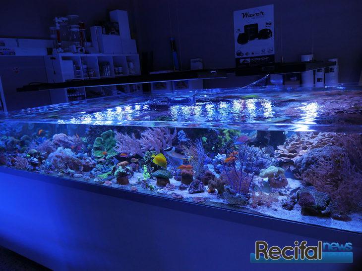 Korallenzucht Moers