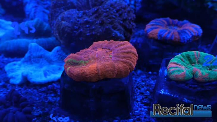 Urban Reef Corals