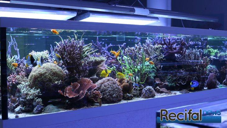 Korallen Outlet