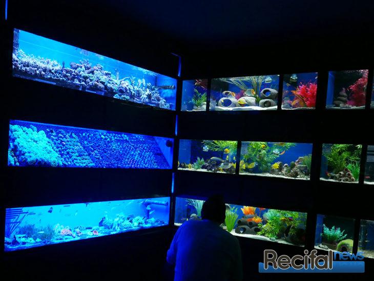Abyss Aquatic Warehouse : l'aquariophilie à l'anglaise