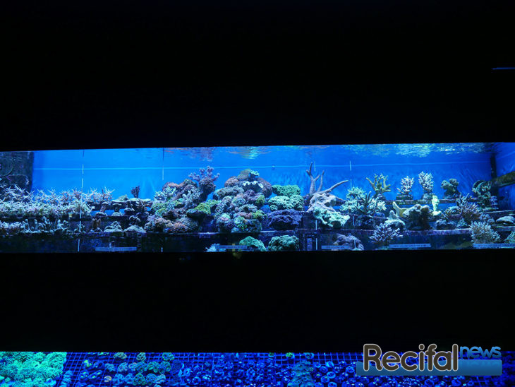Abyss Aquatic Warehouse