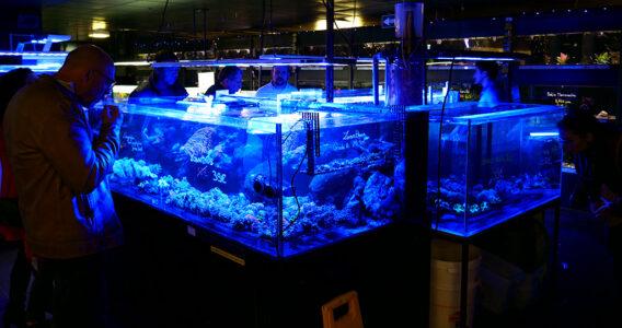 animalis-rencontres-recifales-coraux