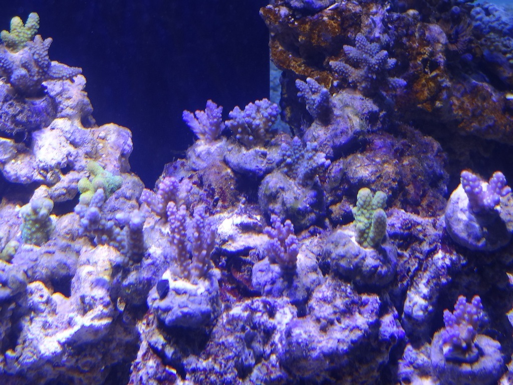 coraux_03.JPG