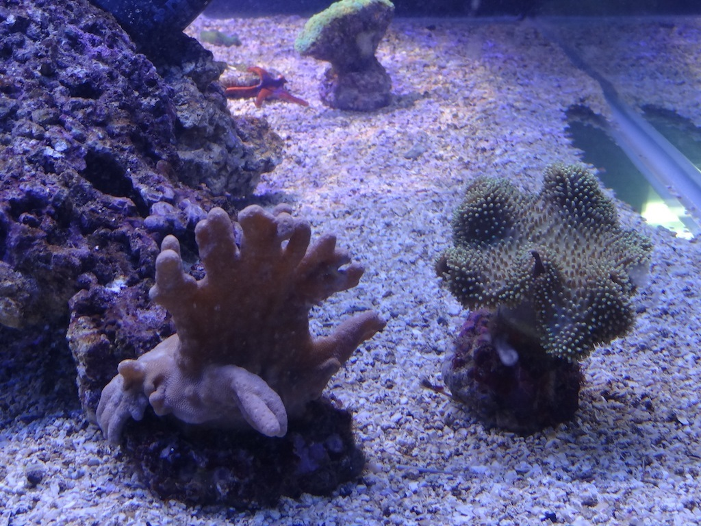 coraux_07.JPG