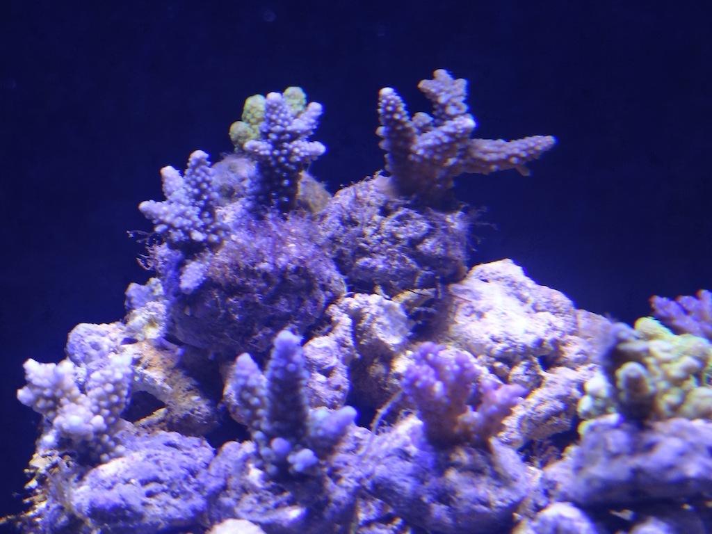 coraux_09.JPG