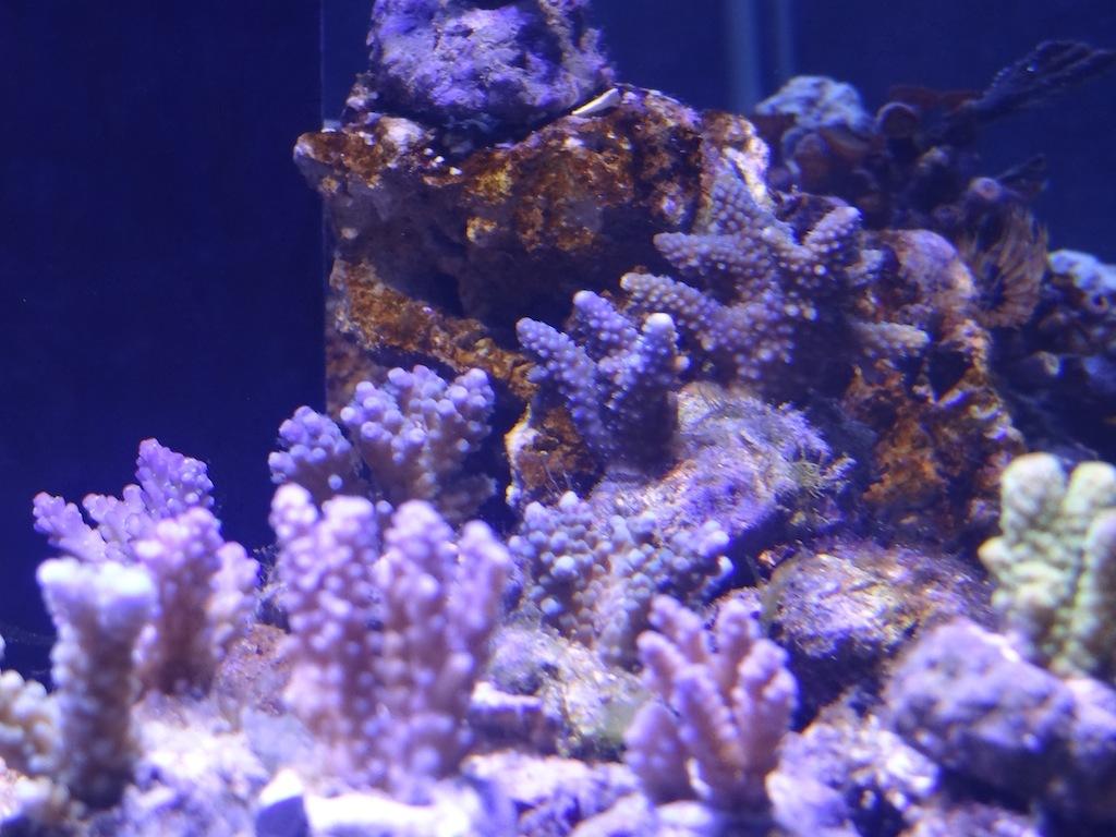 coraux_10.JPG