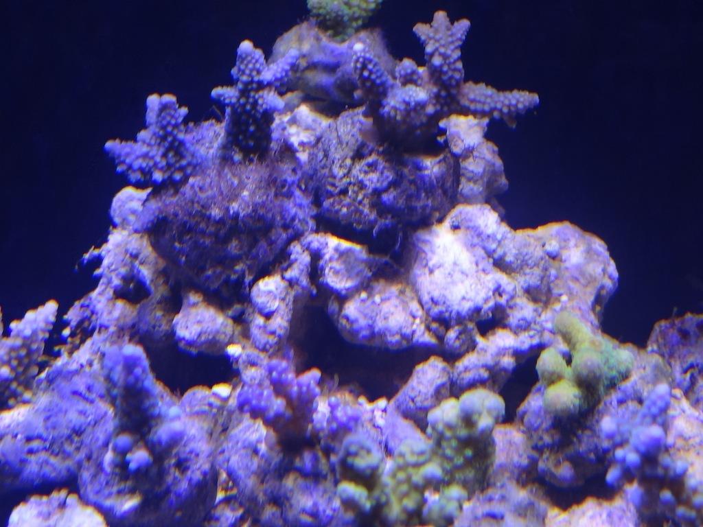 coraux_11.JPG