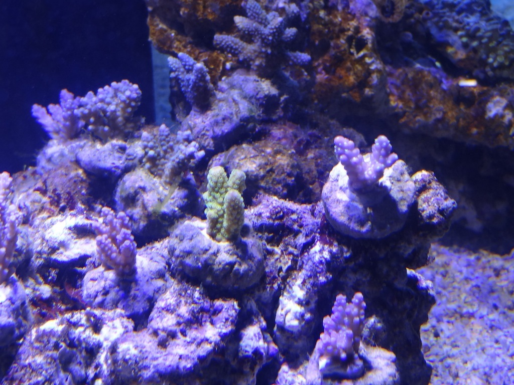 coraux_12.JPG