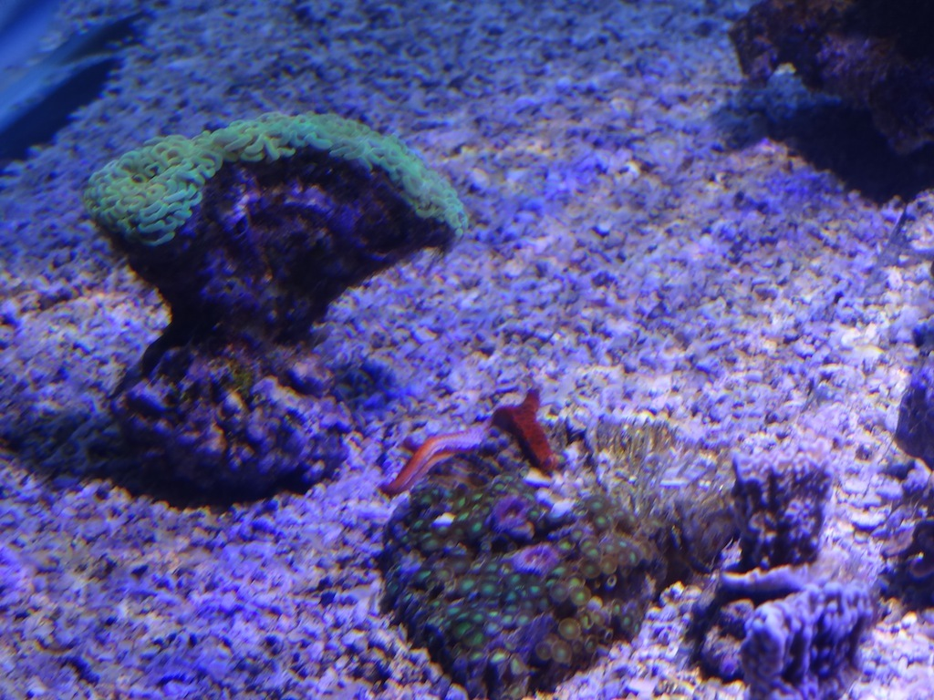 coraux_13.JPG