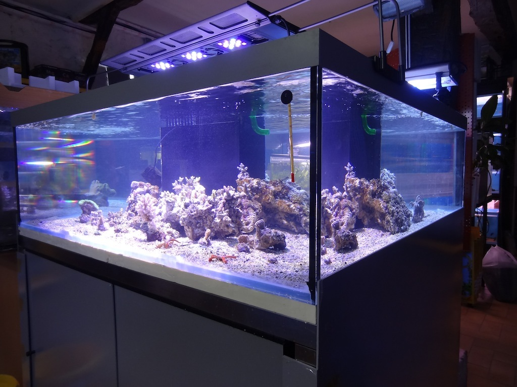 coraux_14.JPG