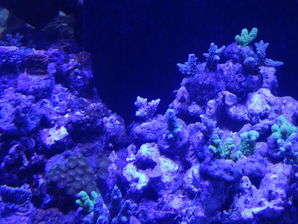 coraux_16.JPG