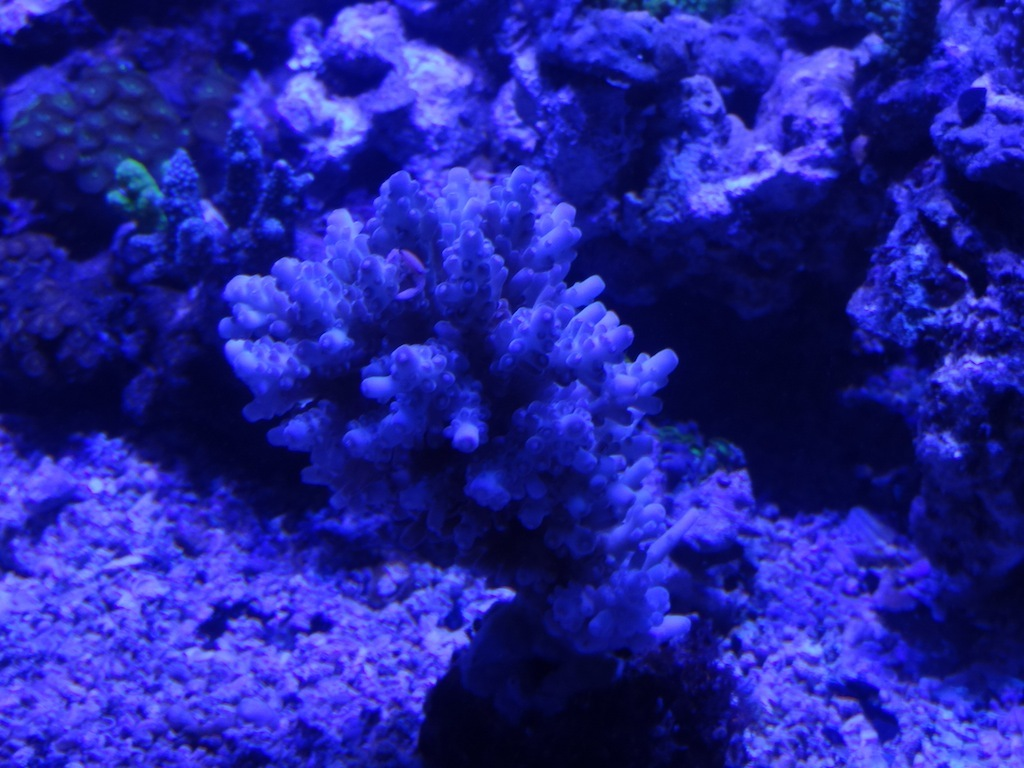 coraux_17.JPG