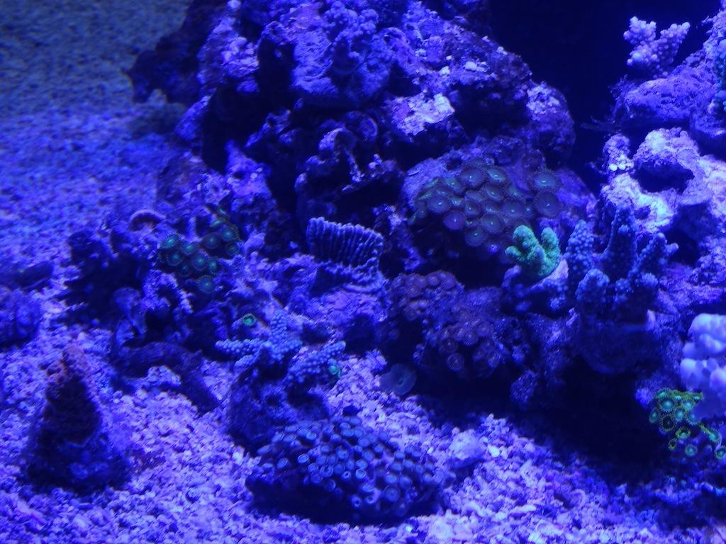 coraux_18.JPG