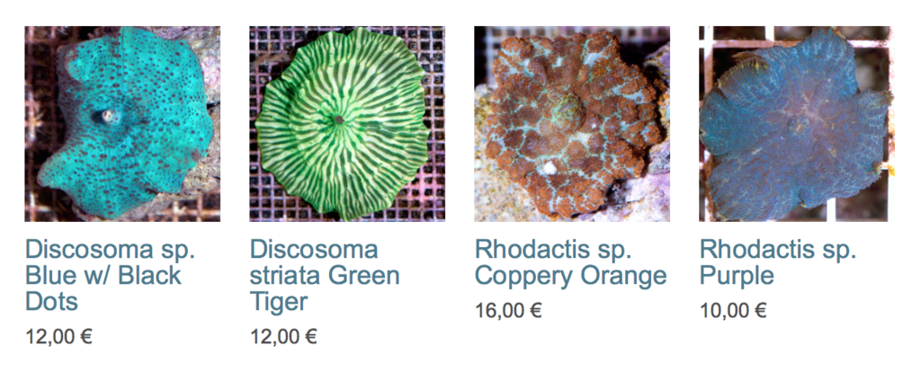 coral-biome-img02.png