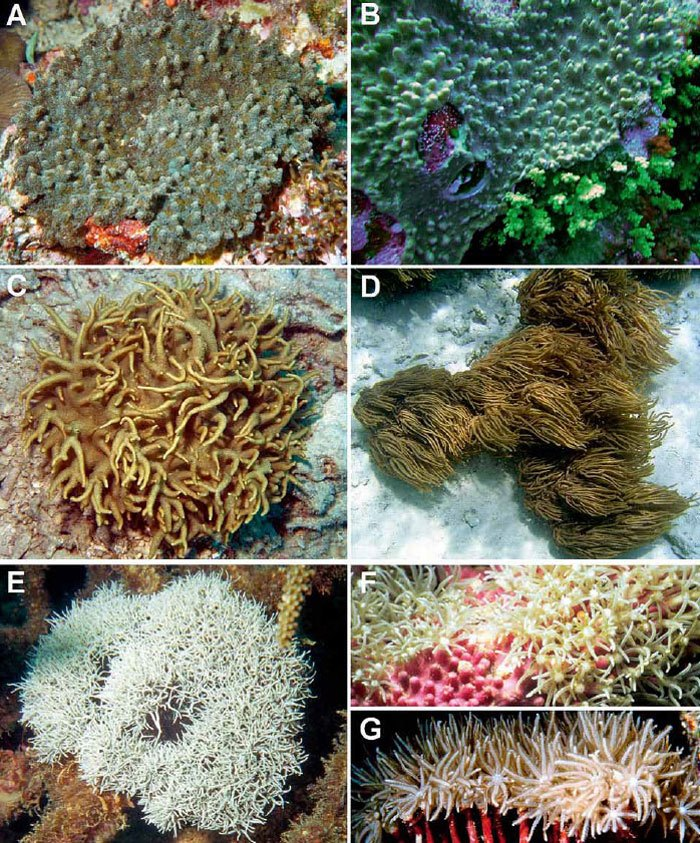 Soft-coral-mimicry-1.jpg