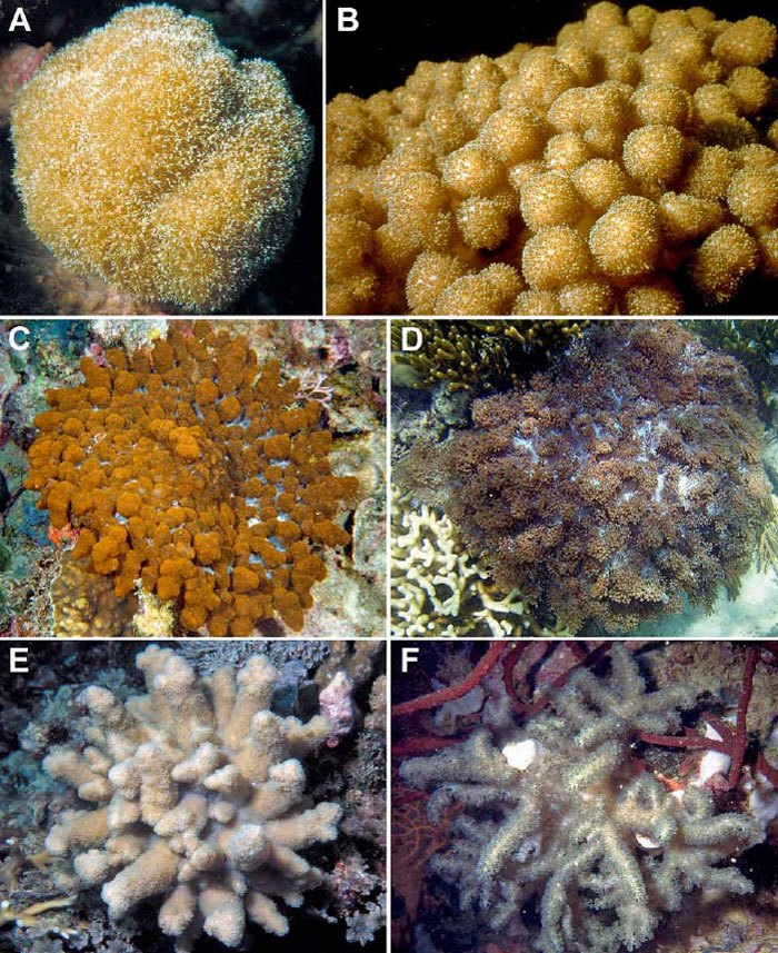 Soft-coral-mimicry-2.jpg