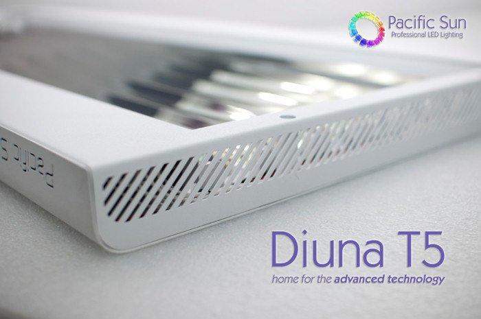 Diuna_2.jpg