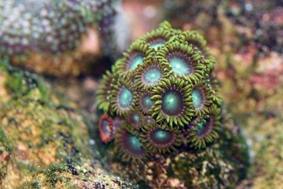 Coralplug2.jpg
