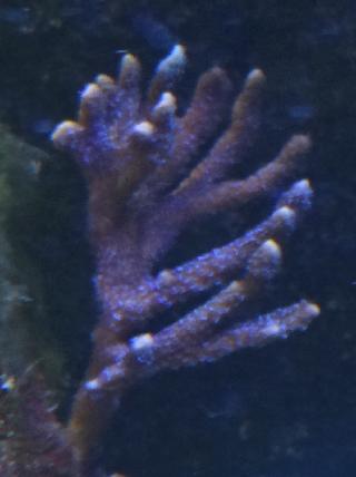 divers1.png