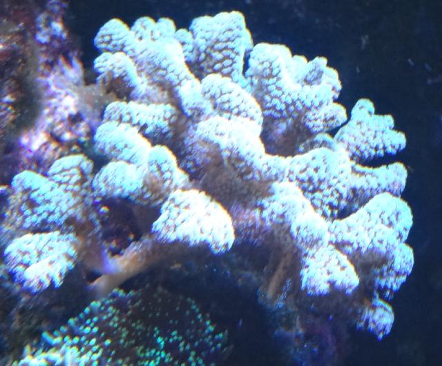 divers2.png