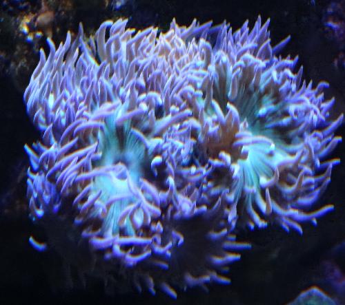 divers3.png