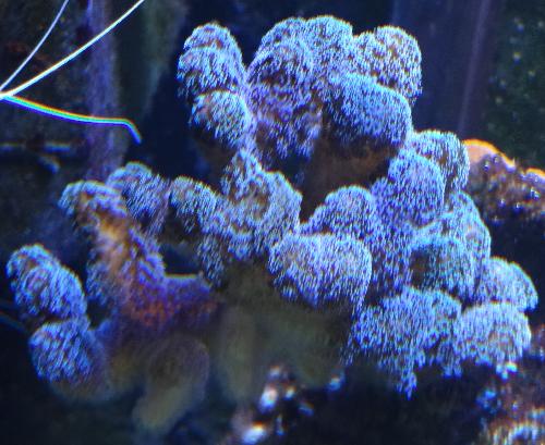divers4.png