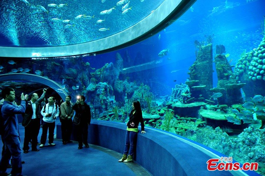 le plus grand aquarium du monde est le chimelong ocean kingdom r cifal news. Black Bedroom Furniture Sets. Home Design Ideas