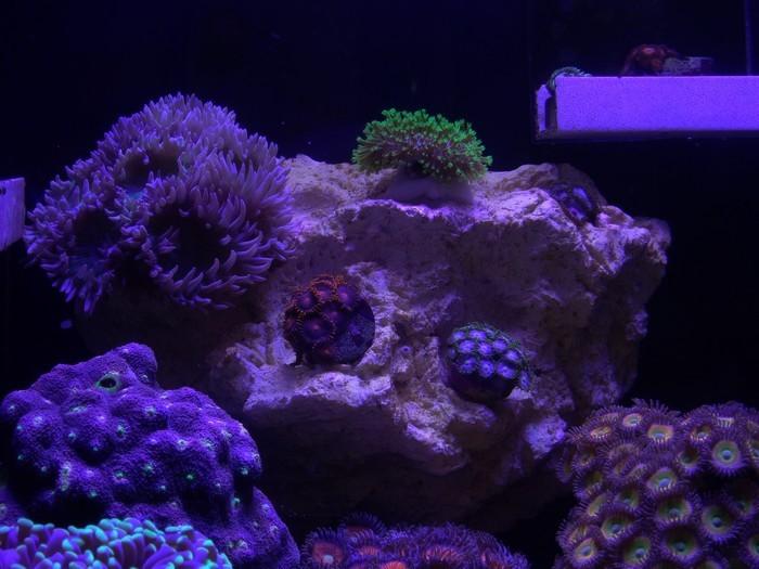 tunze-coral-rack-bac.JPG