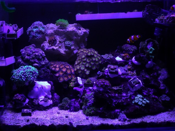 tunze-coral-rack-bacentier.JPG